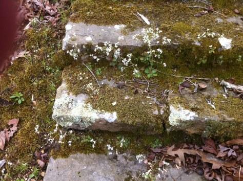 stone stair closeup