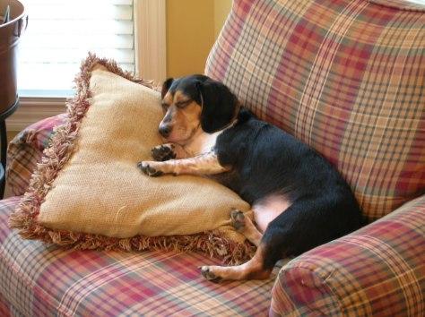 Belle resting 2